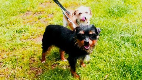 Tiffy und Susi