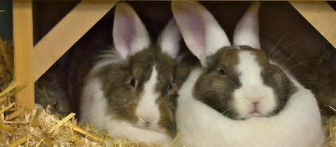 Kaninchen Aris und Akira
