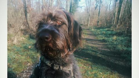 Tiervermittlung Hallo Hessen_Hund Fuzzy