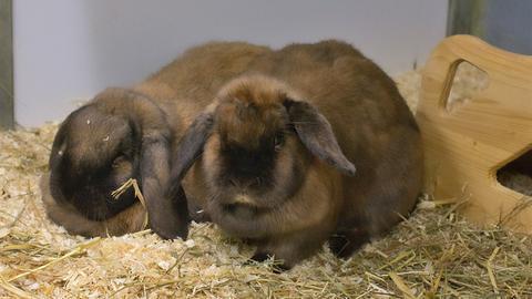 Kaninchen Moppel und Hoppel