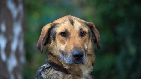 Hund Peter