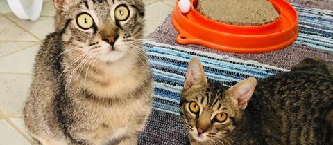 Katzen Titi und Toto