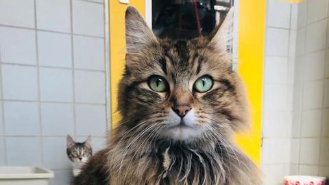 Katze Lizzy