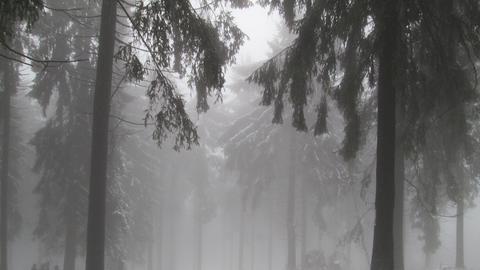 Wetter-Bilder Gisela Böning aus Frankfurt-2