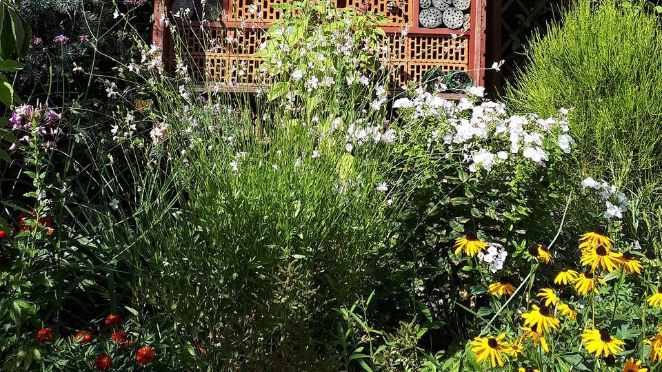 bildergalerie ihre wildblumen bilder hr hallo hessen holt bienen und. Black Bedroom Furniture Sets. Home Design Ideas