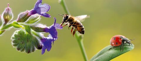 Biene, Marienkäfer und Blumen