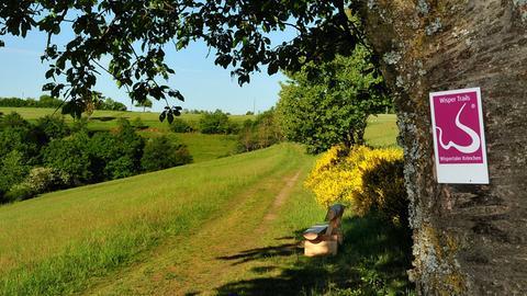 Wanderweg Wispertaler Krönchen bei strahlendem Sonnenschein. Blick auf Feld und Bänkchen.