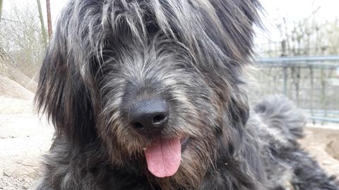 Hund Pascal
