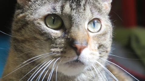 Katze Dana