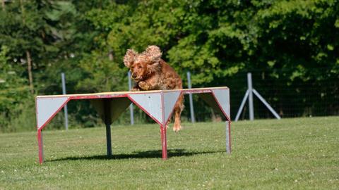 Agility, Hundesport