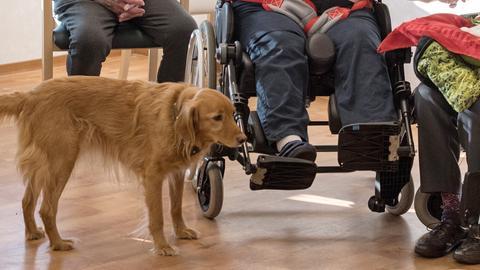 Hunde im Einsatz für Menschen