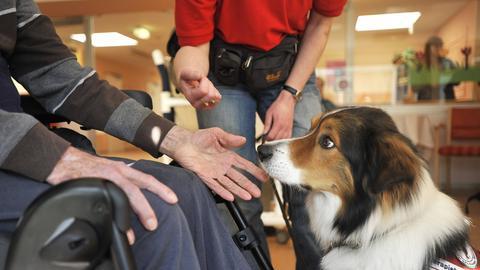 Therapiehund im einsatz