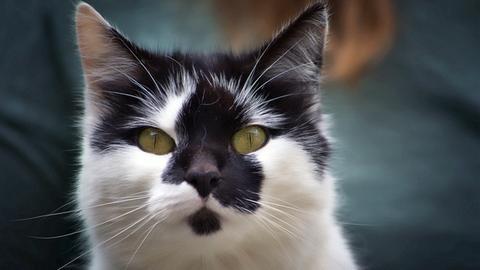 Katze Gretchen