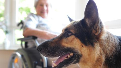 Therapiehund Cooper arbeitet mit demenzkranken Senioren