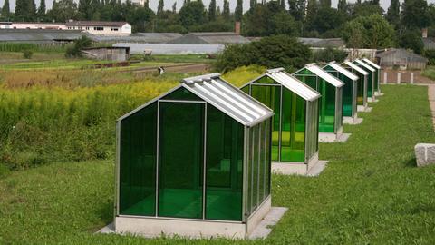 Sieben grüne und leere Plexiglas-Gewächshäuser
