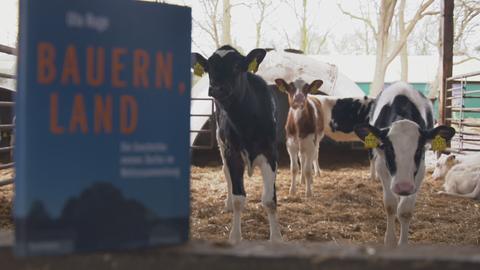 Buchcover mit Kühen im Hintergrund