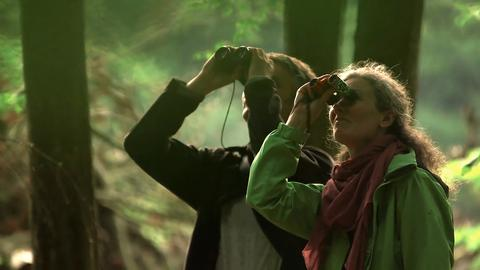Fledermausforscher Markus Diez und seine Kollegin Ramona Divivier halten im Wald Ausschau nach einer Bechstein-Fledermaus.