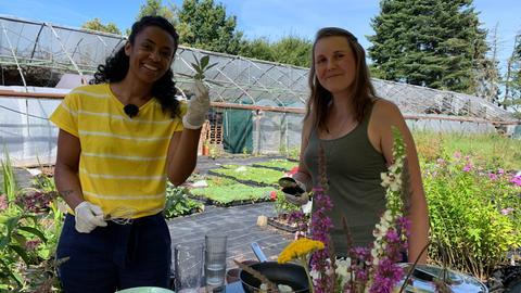Salbei – Alte Heilpflanze und neue Rezepte