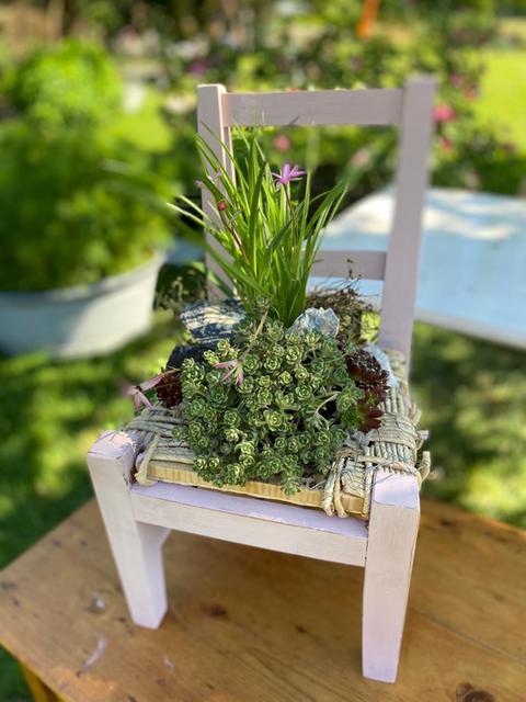 Weiß angestrichener, kleiner, bepflanzter Stuhl.