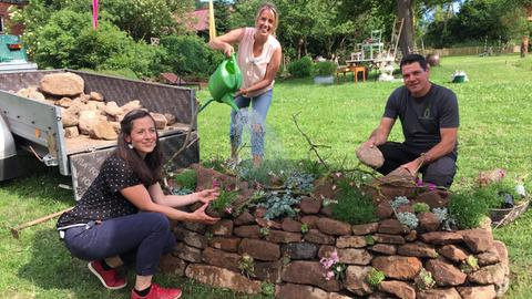 herkules-Pflanzteam bepflanzt und gießt die Steinmauer.