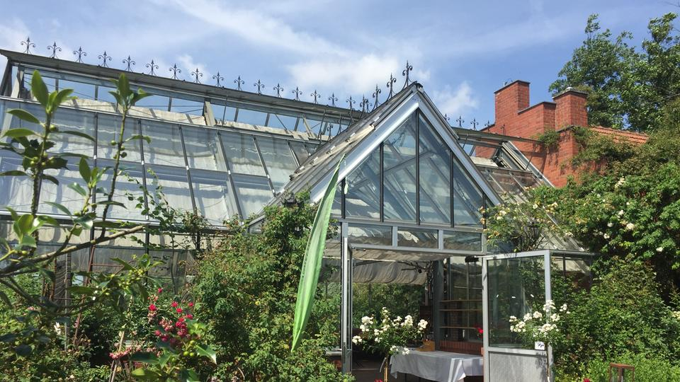 Rosenküche im Glashaus