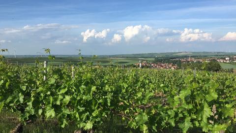 Hessen à la carte - Zu Gast in Rheinhessen