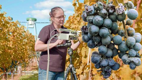 Weinbau im Klimawandel