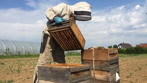 Wanderimker Jürgen Parg aus Otzberg mit Bienen