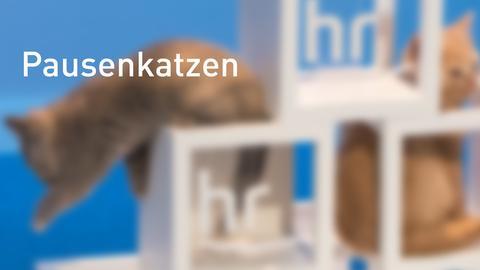 Banner Pausenkatzen