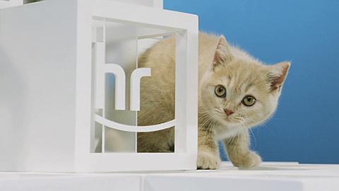 hr-Pausenkatzen