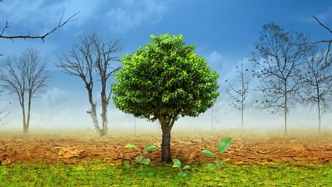 Eine verdörrte Landschaft mit toten Bäumen, in der nur noch ein Baum grün ist.