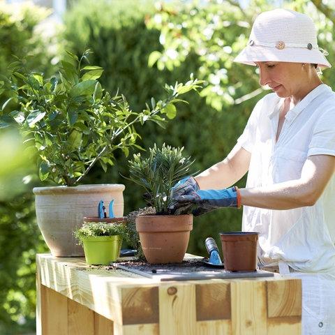 Eine Frau pflanzt im Garten einen kleinen Oleander in einen Topf.