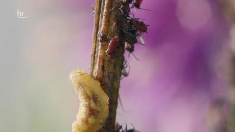 Insekten in Gefahr