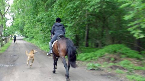 Verfolgunsgjagd mit dem Pferd