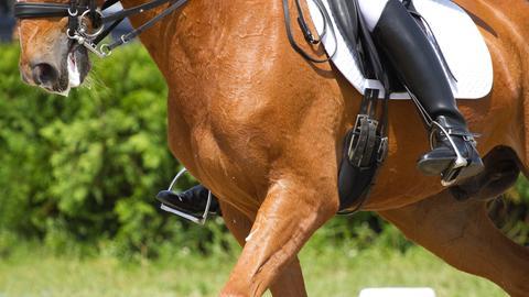 Reiter auf einem Pferd Sujet