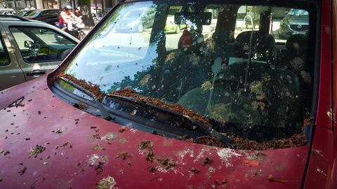 Ein Auto voller Vogelkot
