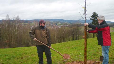 Max Bäumlisberger (links) pflanzt mit seinem Vater einen Baum einer alten Apfelsorte.