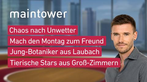 """Die Themen bei """"maintower"""" am 7. Juni: Chaos nach Unwetter, Mach den Montag zum Freund, Jung-Botaniker aus Laubach, Tierische Stars aus Groß-Zimmern"""