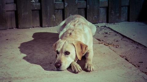 Hund in der Wetterau ausgesetzt