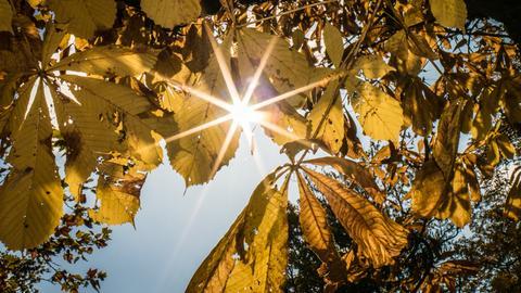 Goldener Herbst Sonne Laub Gegenlicht