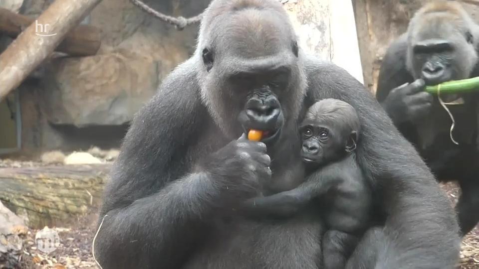 Zoo Sendungen