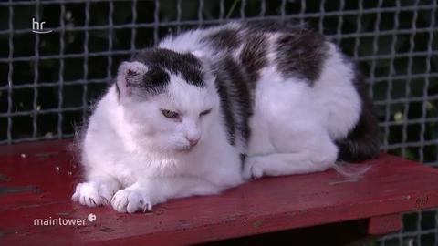 Katze Ella