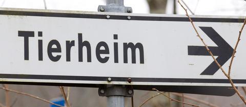 Tierheim Sujetbild