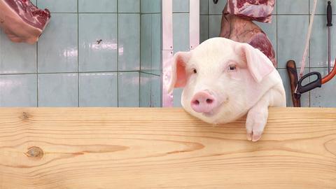 Ein Schwein beim Schlachter