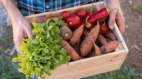 Eine Gemüsekiste mit teilweise unförmigen Karotten, Tomaten und Paprika.