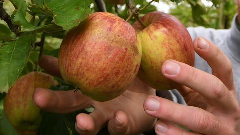 Hessen ist ein Apfel-Land