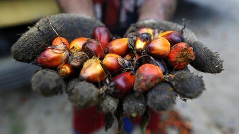Palmöl kann gesundheitsschädlich sein