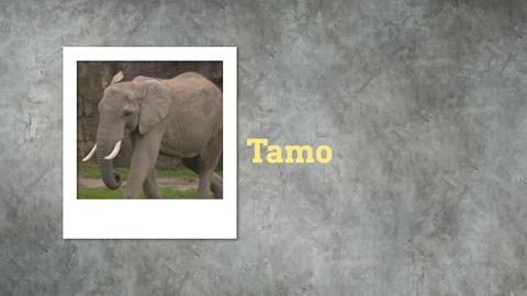 Tamo elefant mex börsenspiel