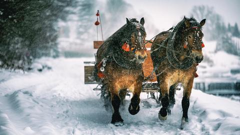 Zebras im Schnee