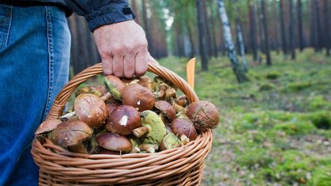 Ein Pilzsammler mit einem Korb voll Pilze